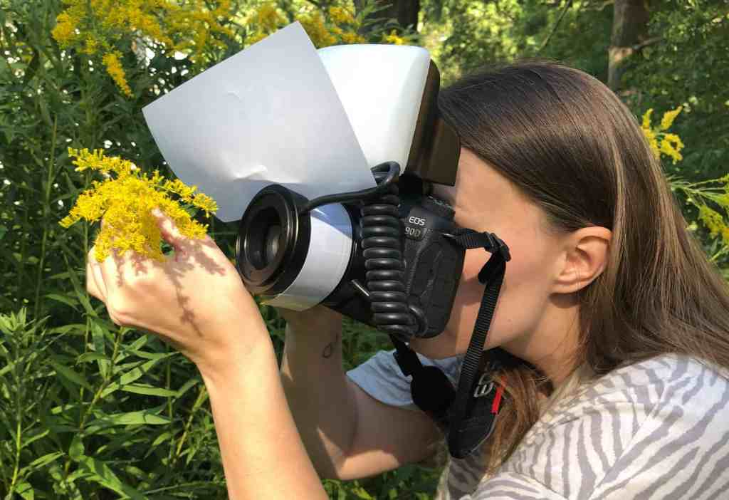 Danae Wolfe, photographer of insects