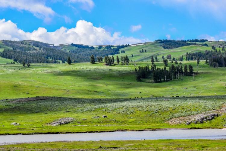 Yellowstone 2014 246