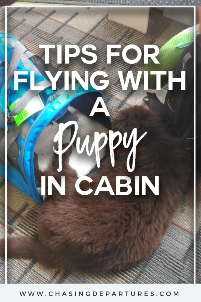 Tips for Flying With a Puppy in Cabin | I frequently find myself flying cross country with a puppy stowed safely under the seat in front of me. Over the years I have learned what works and what definitely doesn't. So, here are my tips for flying with a puppy in cabin.
