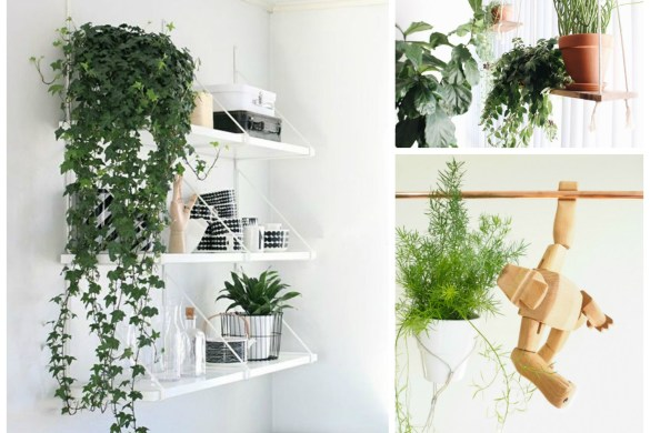 hanging plant ideas