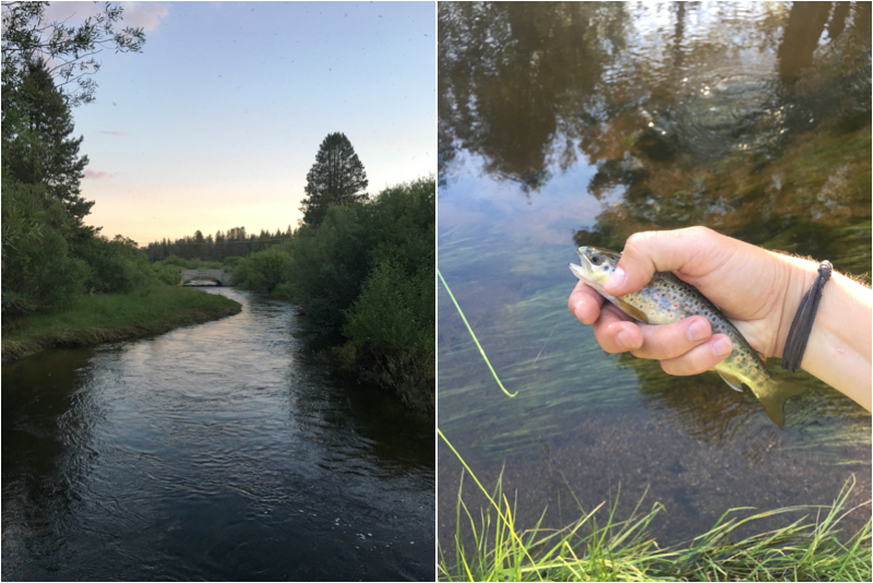 tahoe, fishing, fly fishing, south lake tahoe, brook trout, trout creek, dry fly