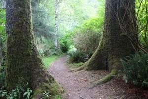 Elk Falls Provincial Park Vancouver Island
