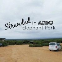 keys locked in car addo elephant park