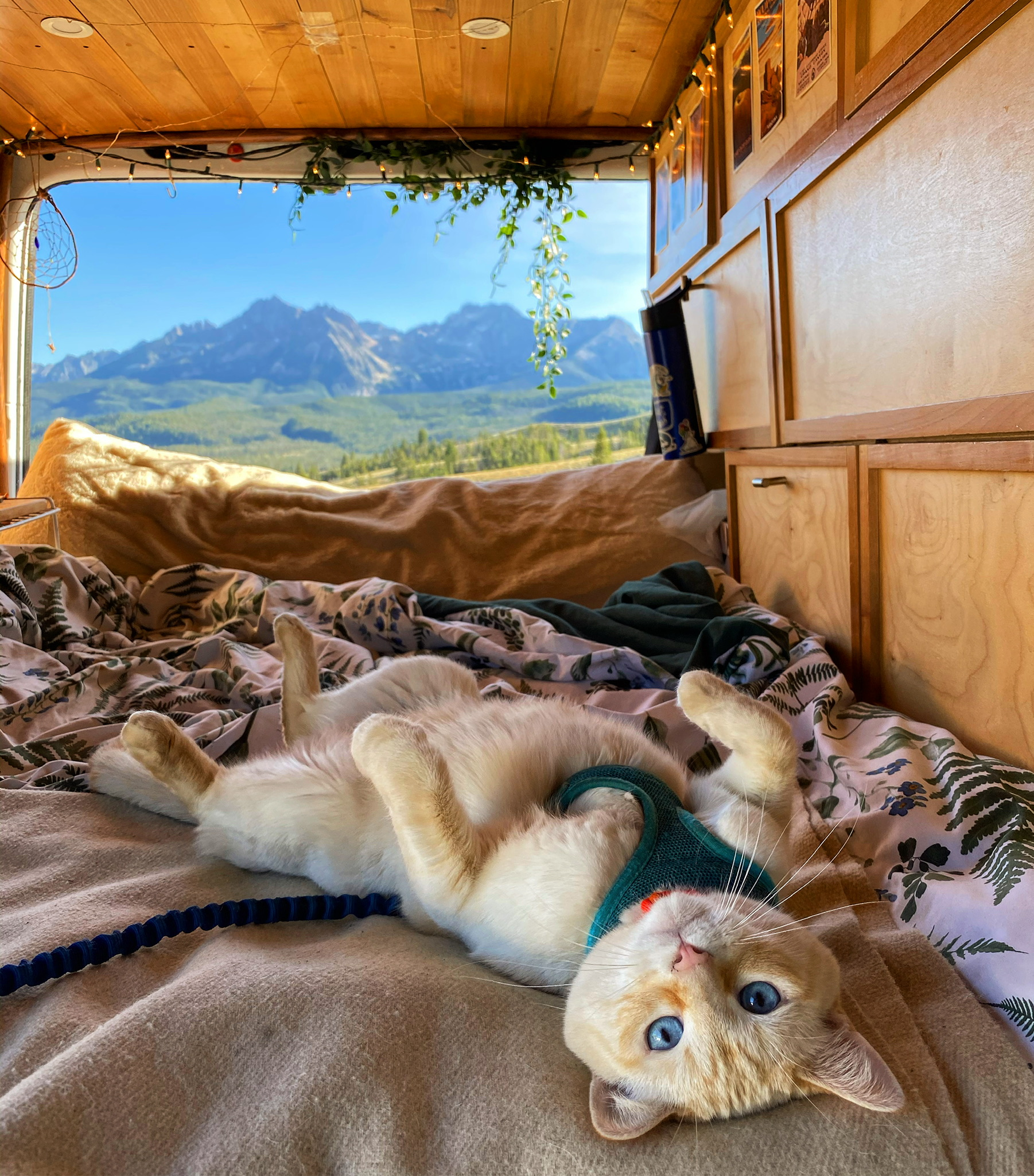 vanlife with a cat - samvanzam