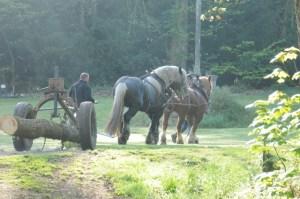 Transport de la grume