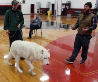 Atka the Wolf CHS Biology 2015