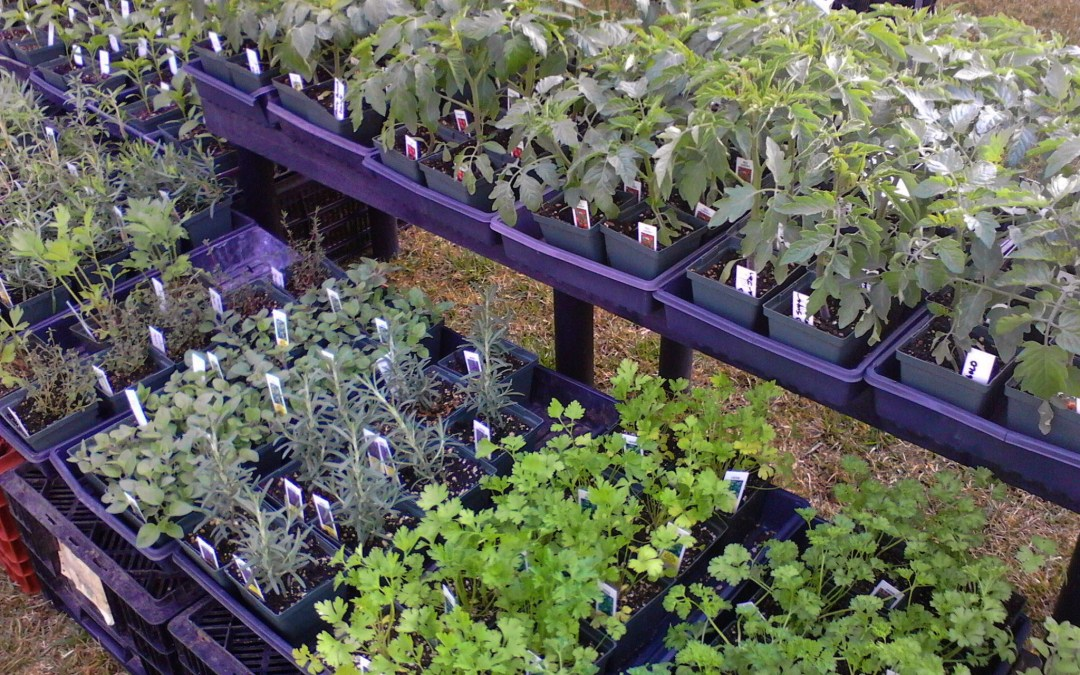April 10th, 8am to 12pm – Spring Plant Sale!