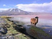 Chatzona Sala Bolivia