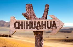 chat chihuahua