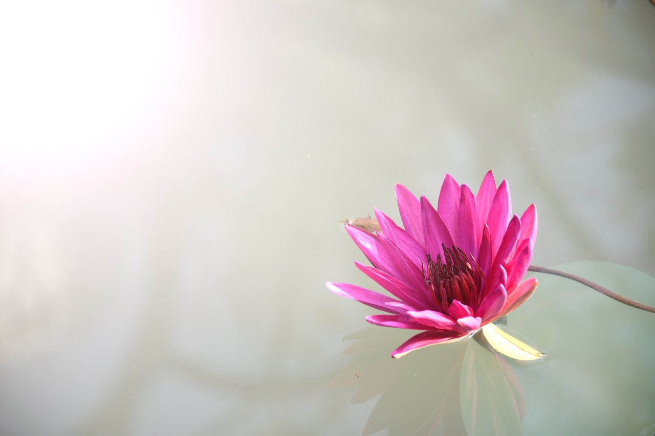 Chatsifieds Lotus (2)