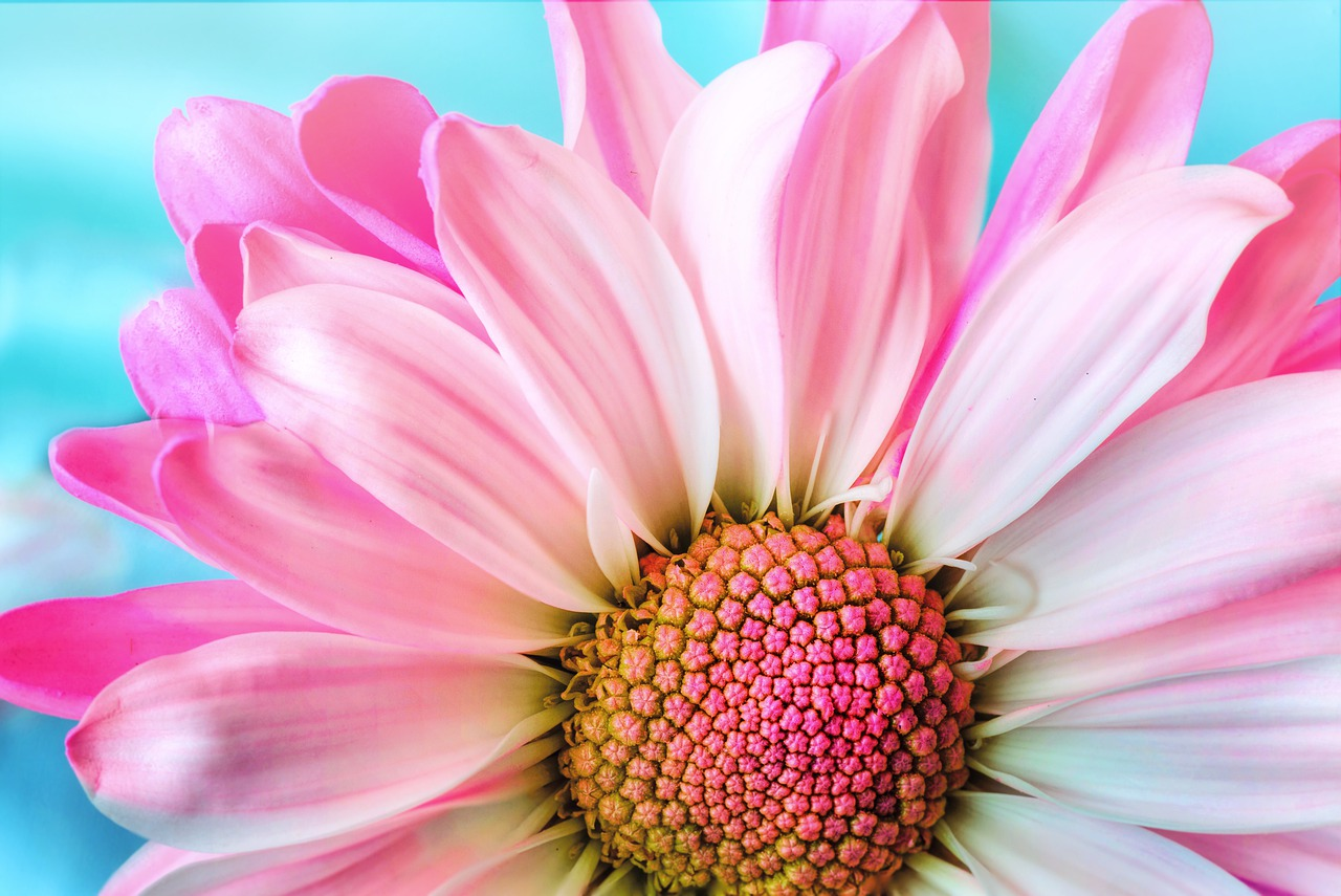 Chatsifieds Flowers