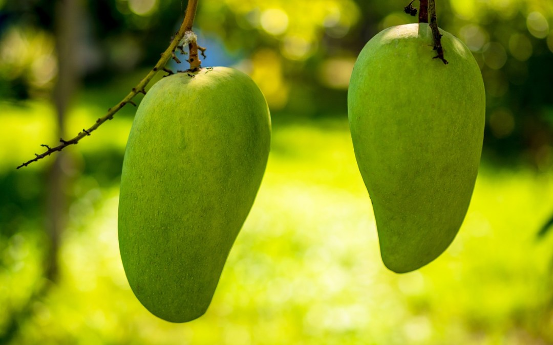 Incredible Benefits Of Mango and Useful Idioms About Mango