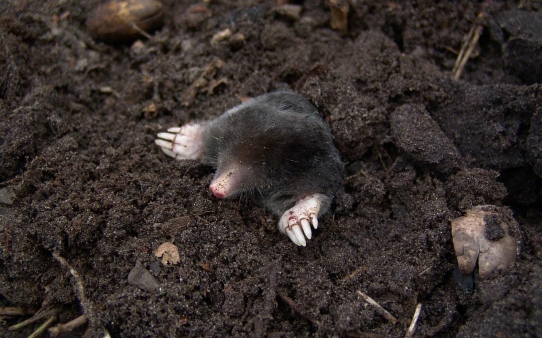 Molehill Idioms – How does a molehill become a mountain?
