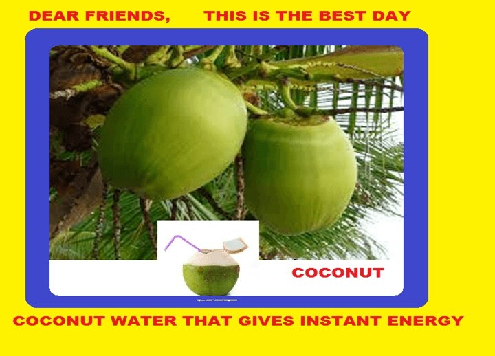 124 Coconut Sayings