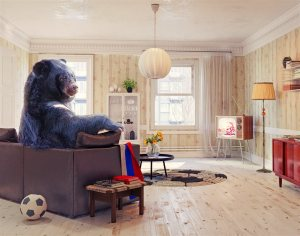 A black bear in the living room | Chattanooga Home Inspector | Home Owners Claims Chattanooga