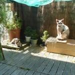 Josquin et Vanille sur le balcon (2)