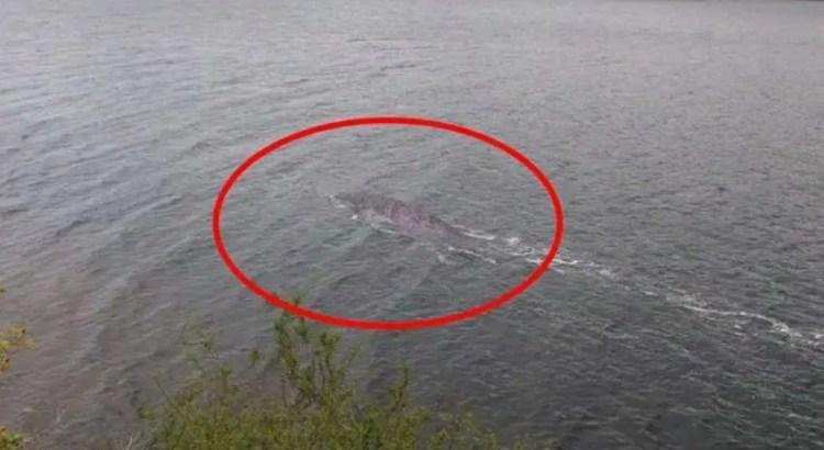 Um turista obtém as melhores evidências do monstro do Lago Ness na história