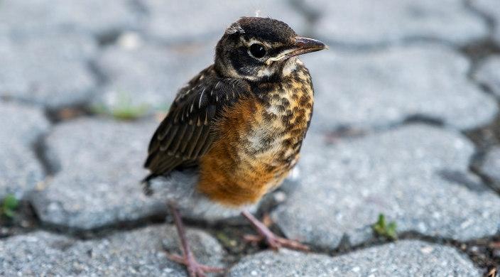 Small brown bird standing on grey stone
