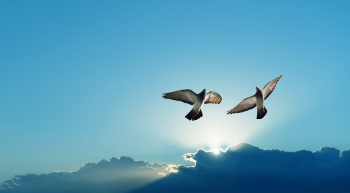 Two birds soaring in a bright blue sky with clouds and sunshine in the background