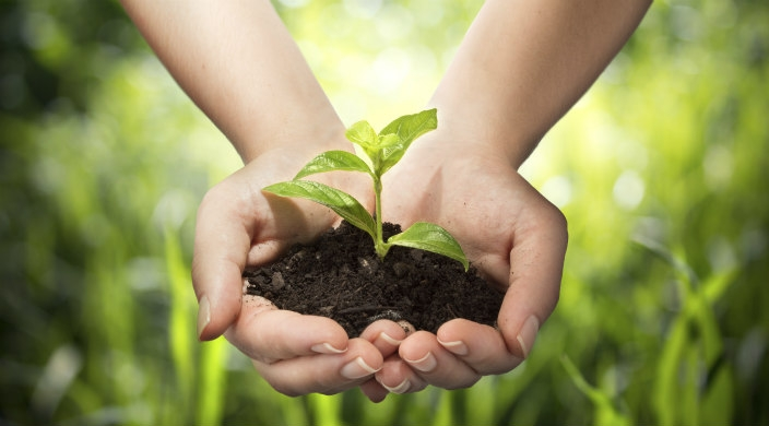 A cupped pair of hands holding a small green plant in dirt