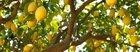 Judaism and Environmentalism: Bal Tashchit