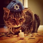 Annual Hanukkah Cat