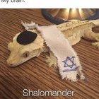 Shabbat Shalomander