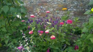 Zinnias in Walled Garden.jpg