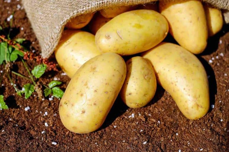 how do you make Boulangere Potatoes