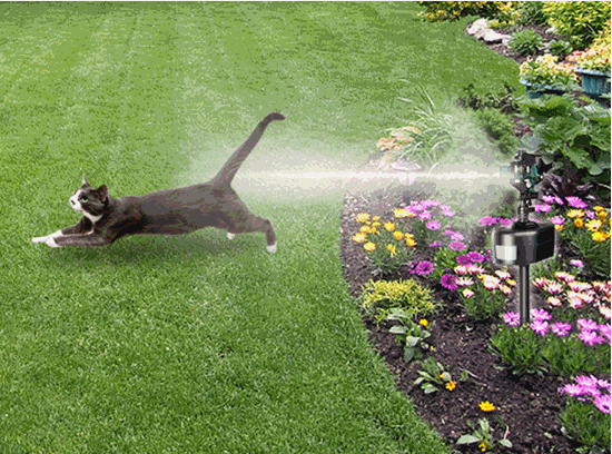 How To Keep Cats Out Of Your Garden