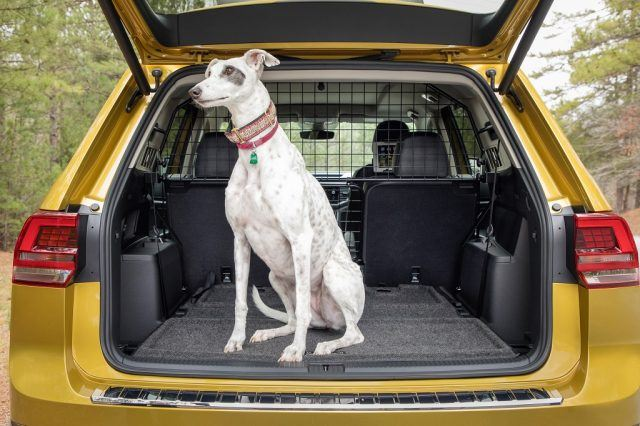 A cargo divider is never a bad accessory to opt for if a canine in the back is part of your daily routine   Volkswagen
