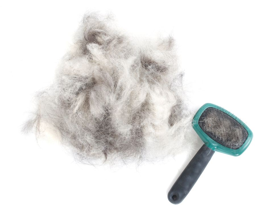 Image Result For Best Way To Get Dog Hair Out Of Car Carpet