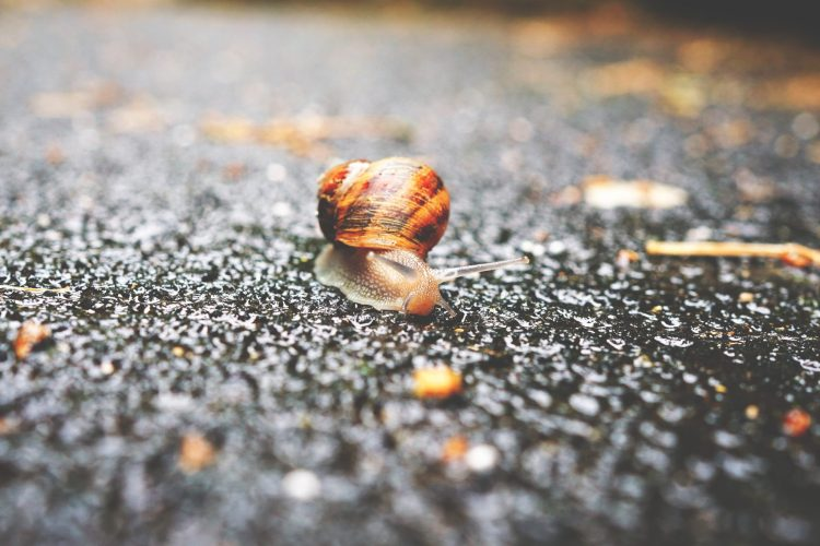 Credit: Erwan Hesry SLOW SNAIL Contracts How to speed up your contracts