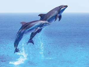 March Is Dolphin Awareness Month | Britannica.com