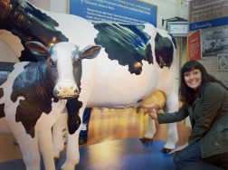 Tillamook Cheese Factory. Tillamook, Oregon