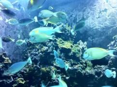 Underwater Scuba Preview