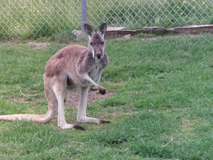 Wild Animal Safari Park, Strafford, MO