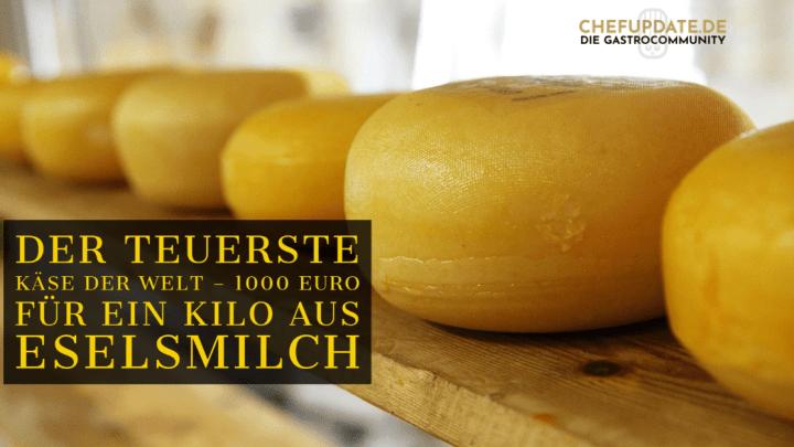 Der teuerste Käse der Welt – 1000 Euro für ein Kilo aus Eselsmilch
