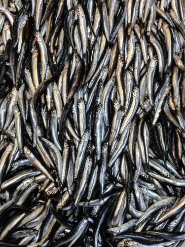 Sardine al mercato del pesce di Kadiköy a Istanbul