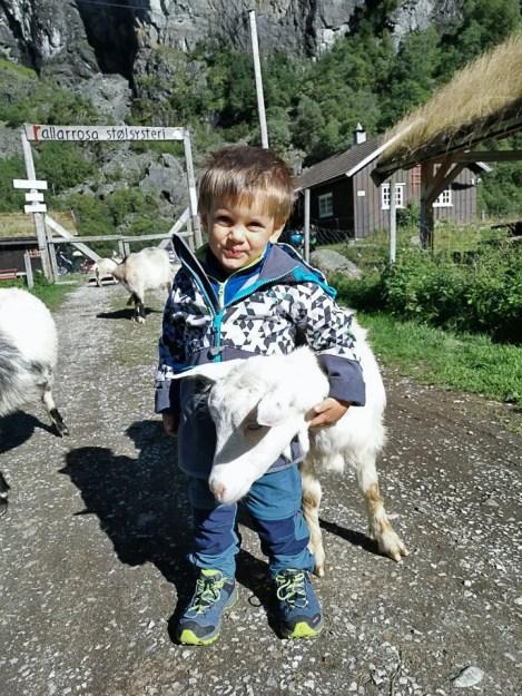 Che il viaggio abbia inizio tra le capre a Rallarrosa Stølsysteri durante la Flamsbana