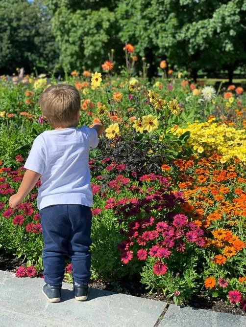 Che il viaggio abbia inizio, fiori a Vigeland Park
