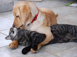 10 Of The Cutest Dog Cat Friendships In Photos Chelsea Dogs Blog