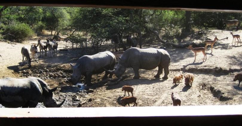 african waterhole community of animals