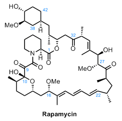 rapamycin_1.jpg