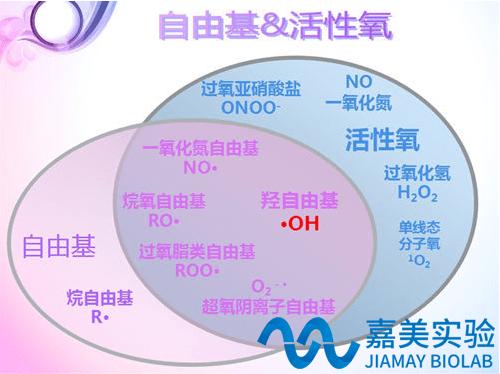抗氧化/自由基檢測價格 廠家:北京嘉美臻元生物技術有限公司