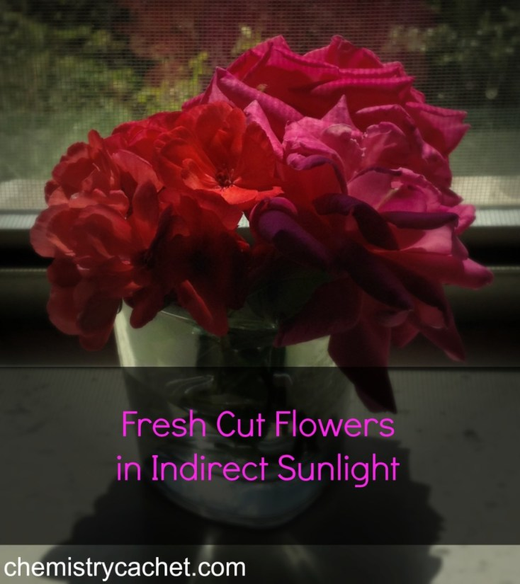Always put fresh cut flowers in indirect sunlight chemistrycachet.com