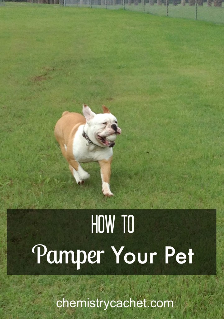 How to Pamper Your Pet with Grain Free Food chemistrycachet.com