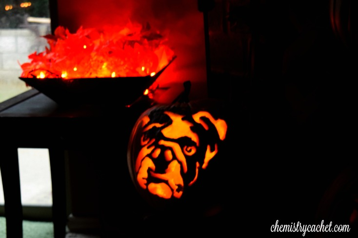 Bulldog Pumpkin for Halloween chemistrycachet.com
