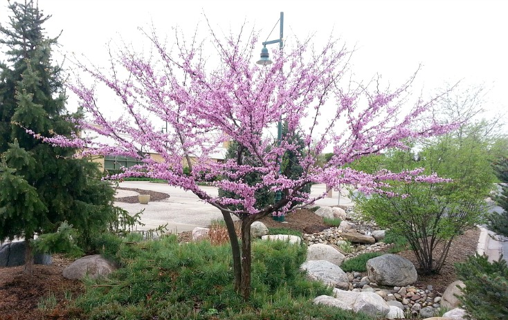 7 Unmistakable Signs Spring is Coming in Texas (or anywhere!) on chemistrycachet.com