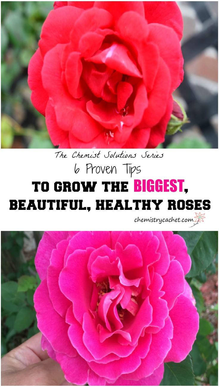 Tack Tender Roses 86